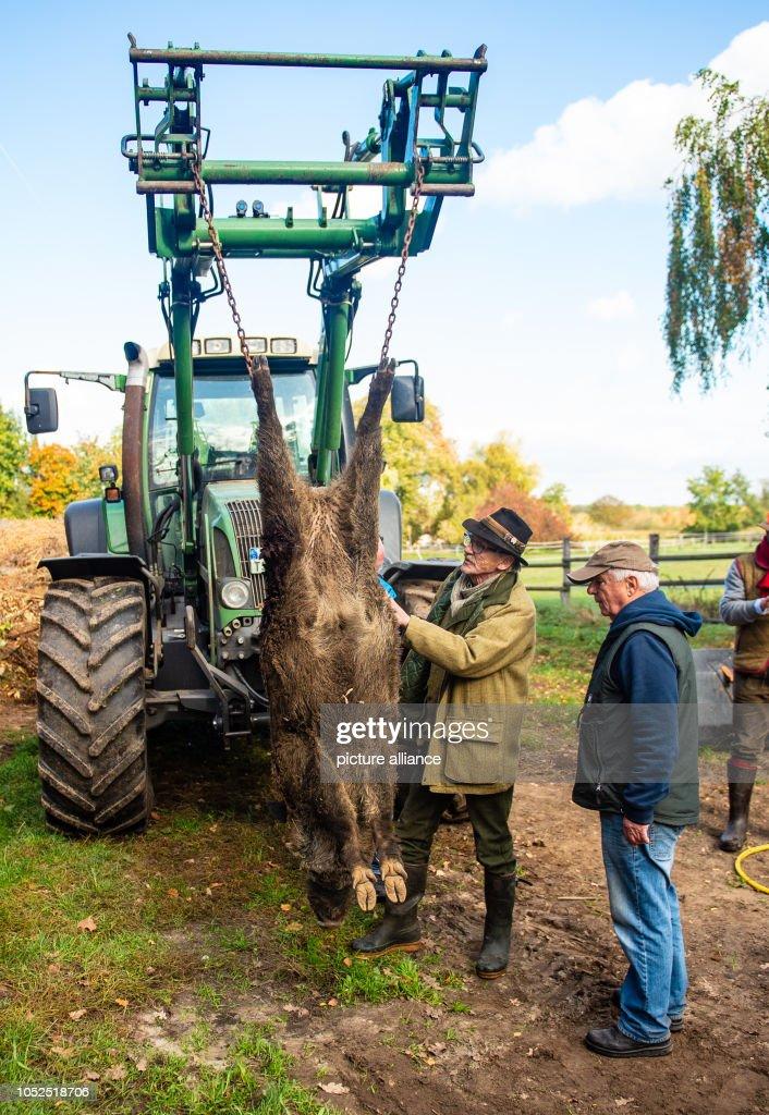 Lüneburg hunting wild boars : News Photo