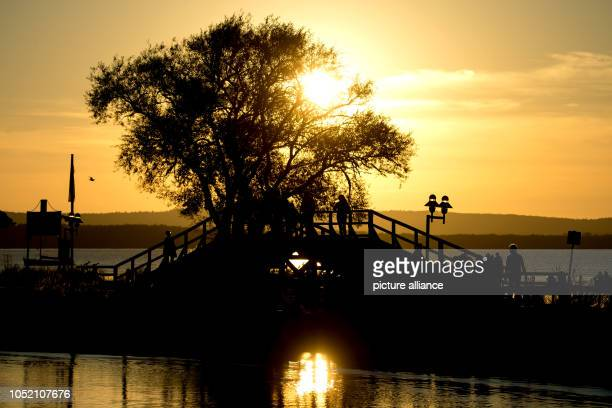 Lower Saxony Steinhude The sun sets behind a tree at Steinhuder Meer Photo HaukeChristian Dittrich/dpa