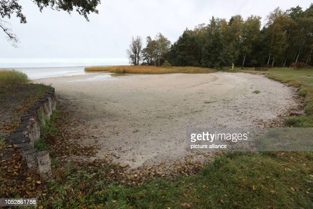 October 2018, Mecklenburg-Western Pomerania, Boek: The bathing area at the Müritz is dry at the campsite. The prolonged drought has caused water...