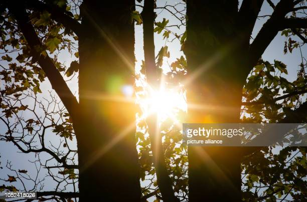 17 October 2018 North RhineWestphalia Bielefeld 17 October 2018 Germany Bielefeld The sun shines through two trunks of a maple in the Teutoburg...