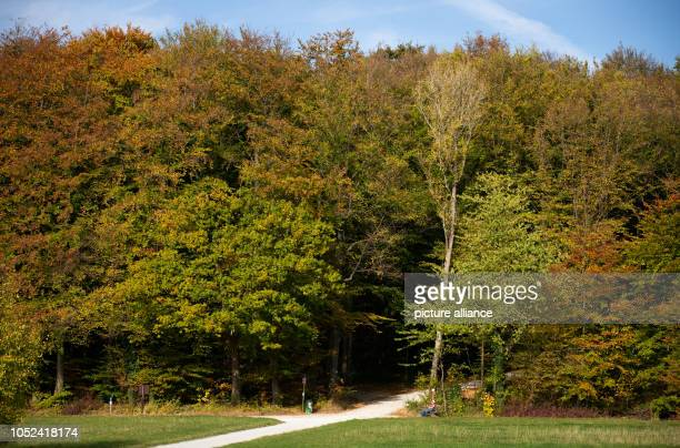 17 October 2018 North RhineWestphalia Bielefeld 17 October 2018 Germany Bielefeld Trees in the Teutoburg Forest already partly wear their colourful...