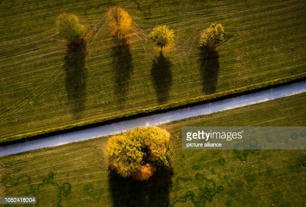 17 October 2018 North RhineWestphalia Bielefeld 17 October 2018 Germany BielefeldTrees wear their autumn dress In autumn just like in spring forests...