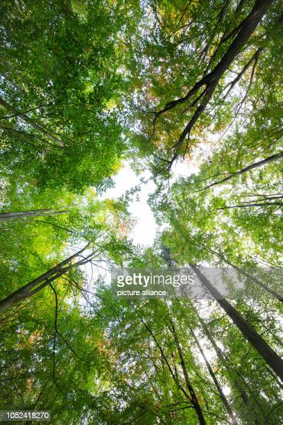 17 October 2018 North RhineWestphalia Bielefeld 17 October 2018 Germany Bielefeld Trees in the Teutoburg Forest partly wear their colourful autumn...