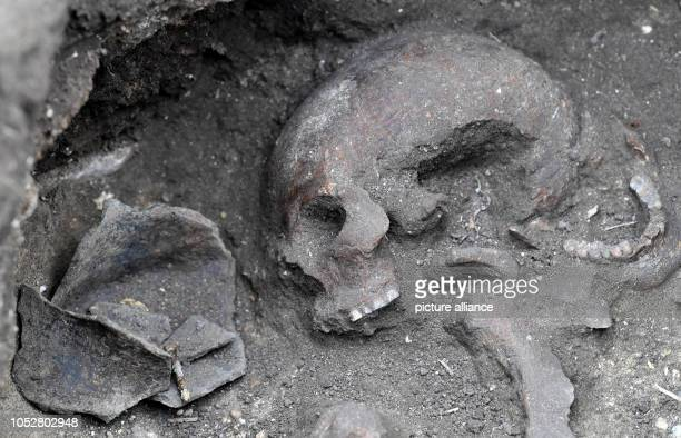 23 October 2018 SaxonyAnhalt Halberstadt A skeleton lies in an early Bronze Age tomb of the Aunjetitz culture In addition to Neolithic and Early Iron...