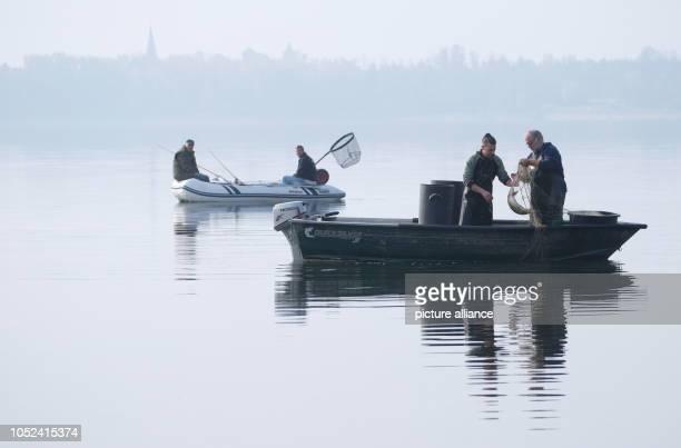October 2018, Saxony-Anhalt, Muldestausee: Inland fisherman Tom Bernau and his apprentice Bryan Kotschrad empty their nets. Since 1992, Bernau has...