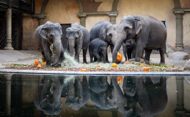 DEU: Halloween With The Elephants In Hamburg Zoo