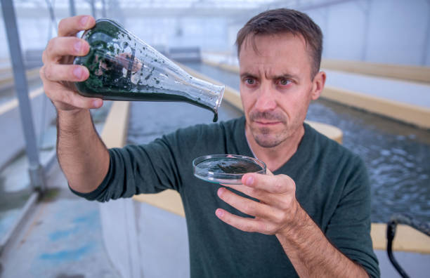 DEU: Algae Cultivation To Become Industrial