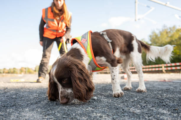 DEU: Species Protection Sniffer Dogs At German Railway