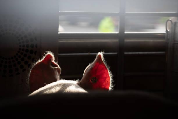 DEU: Animal Transport Controls