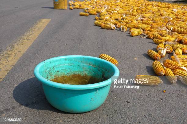October 3, 2018 . Farmers sun autumn grain on rural roads in Duji District, Huaibei City, Anhui Province, China. To prevent motor vehicles from...
