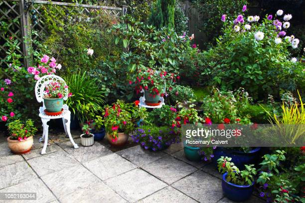 october english garden still full of flowers. - pot plant stock pictures, royalty-free photos & images