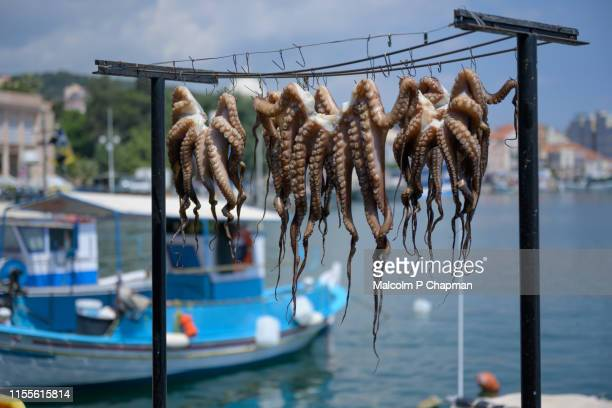 octopus drying in sun at mytilene harbour, lesvos, greece - greece stock pictures, royalty-free photos & images