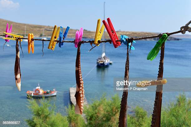 octopus drying, sigri, lesvos, greece - mytilene stock photos and pictures