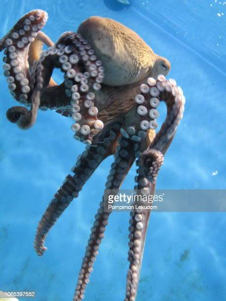 octopus in the aquarium - lula - fotografias e filmes do acervo
