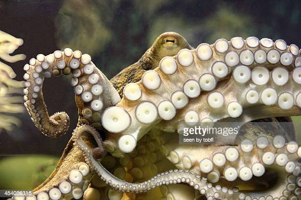 octopus - tentacle stock pictures, royalty-free photos & images