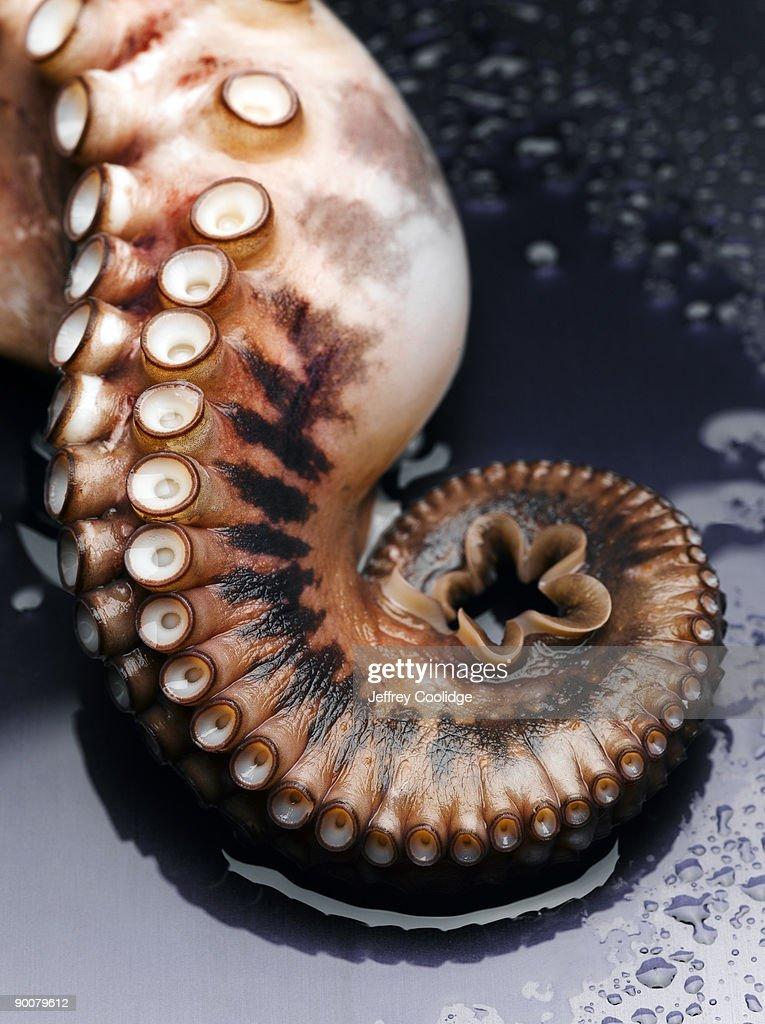 Octopus Tentacle : Stock Photo