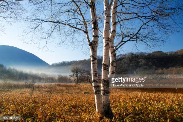 Odashirogahara morning scenery