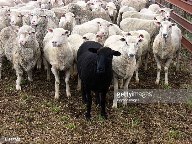 Odd one out: black sheep of family