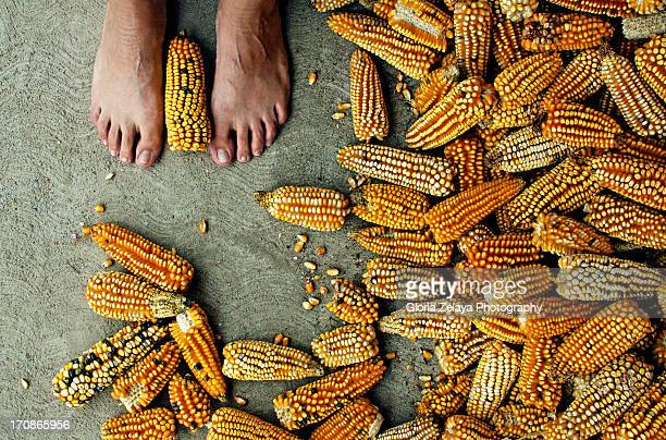 Ode to corn