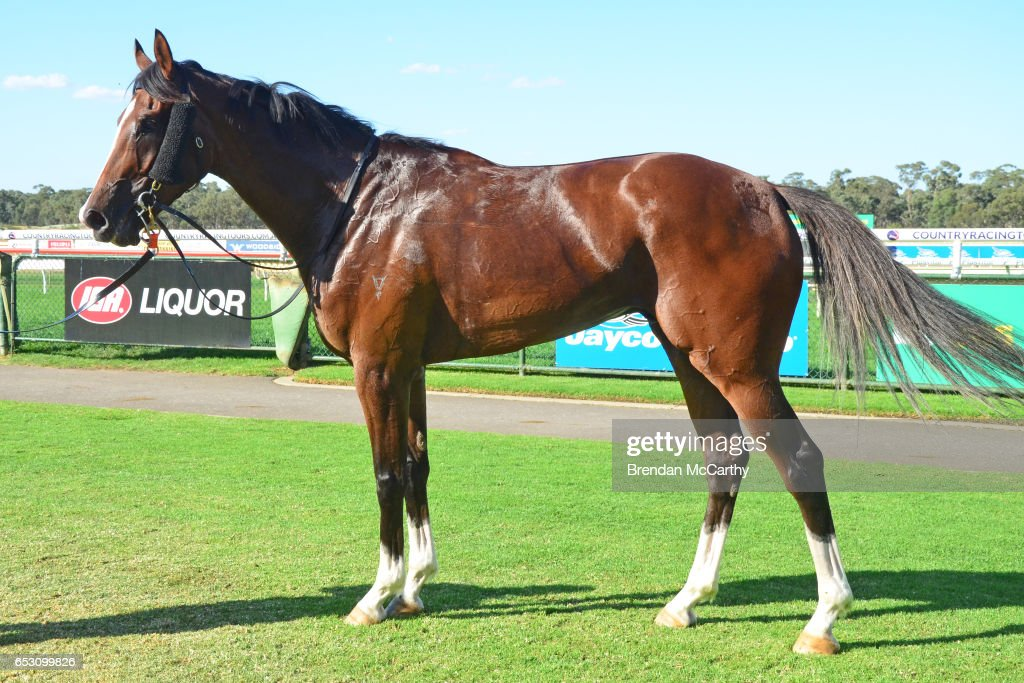 Odeon (NZ) after winning the Leon Weigard Class 1 Handicap at Bendigo Racecourse on March 14, 2017 in Bendigo, Australia.