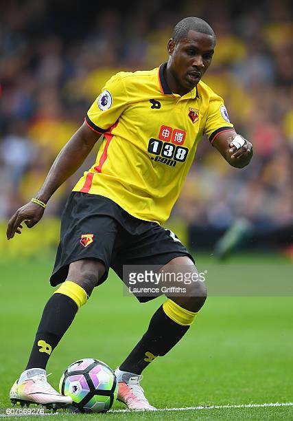 Odion Ighalo of Watford in action during the Premier League match between Watford and Manchester United at Vicarage Road on September 18 2016 in...