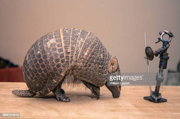 odyssey quixote - armadillo stock pictures, royalty-free photos & images