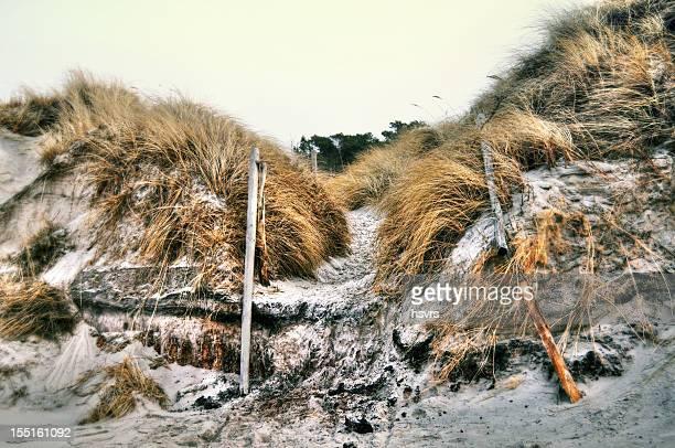 Zacate de playa americano fotograf as e im genes de stock for Zacate de invierno