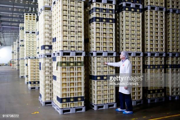 CEO of 'Garcia Baquero' cheese manufacturer Miguel Angel Garcia Baquero checks Manchego cheeses in the company's factory of Alcazar de San Juan on...