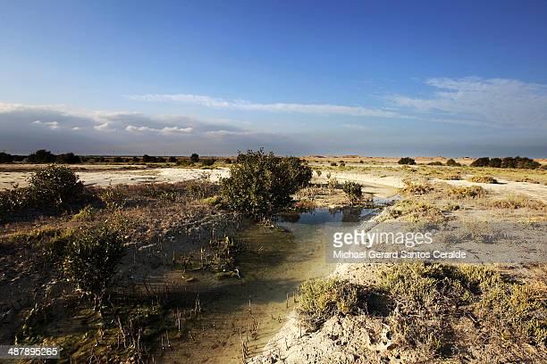 al khor mangrove of qatar - al khor ストックフォトと画像