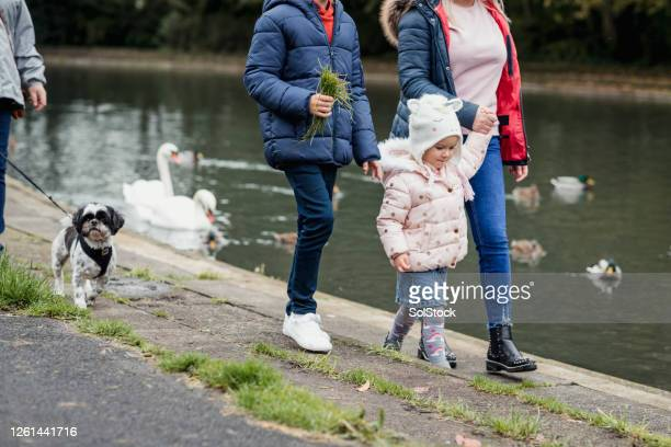 off to feed the ducks - dog walking stock pictures, royalty-free photos & images