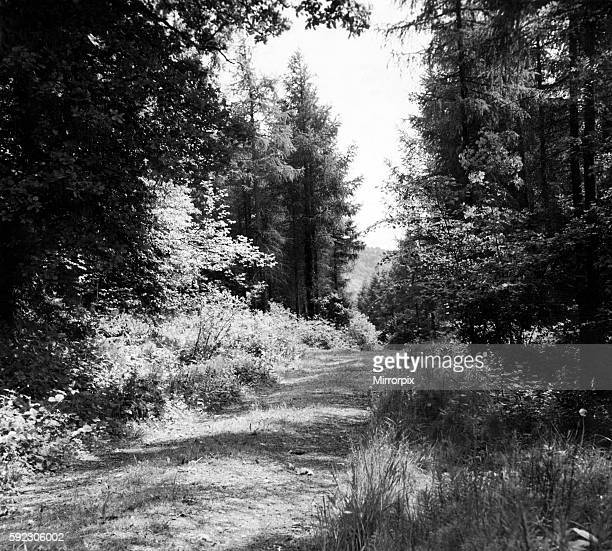 Offa's Dyke is a large linear earthwork that roughly follows the current border between England and Wales. Dense woods at the beginning for the...