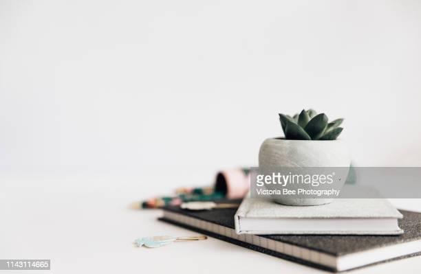 office desk, office supplies and succulent plant on white - modelo ocupação imagens e fotografias de stock