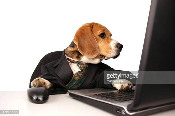 Büro-Hund
