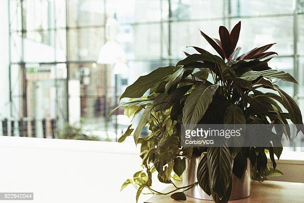 office plants - vcg stock pictures, royalty-free photos & images