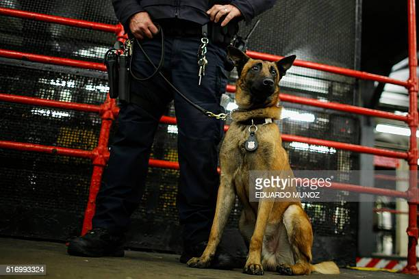 A NYPD officer and his dog patrol the Times Square subway station in New York on March 22 following a series of bombings in Brussels Belgium claimed...