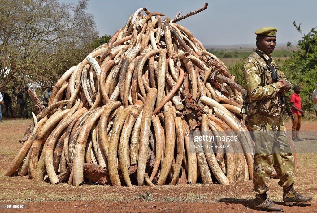Ivory park dating