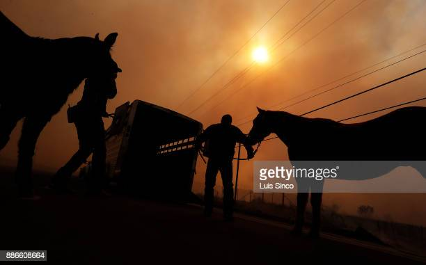 LAPD officers evacuate a pair of horses as the Creek Fire burns along Foothill Boulevard in Sylmar on Tuesday Dec 5 2017 The fire started at about...