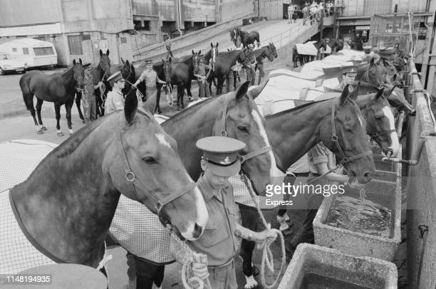 Officers feeding horses during the Royal Tournament the world's largest military tattoo and pageant held by the British Armed Forces at Earls Court...