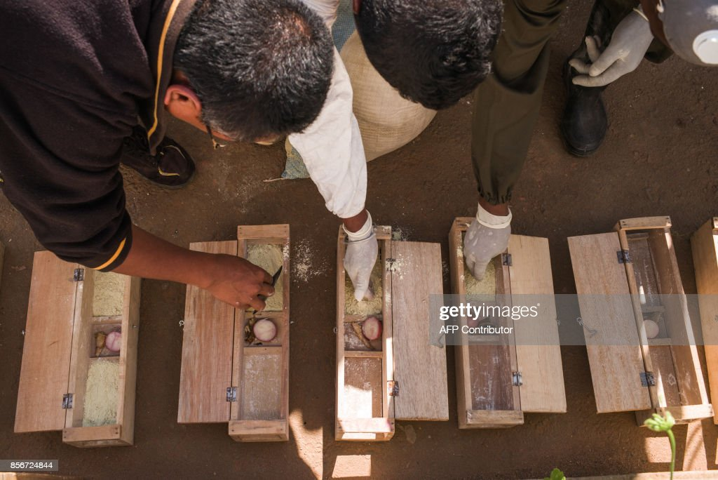 Officers from Ministry of Health operate on rat-traps in a primary school at Andraisoro, a district of the Antananarivo on October 2, 2017. Rats disseminate fleas which are carrier of the plague bacterium. Rats enter these little wood boxes which contain a pesticide that kills fleas. /