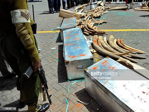 Officers from the Kenya Wildlife Services stand guard on May 6 2011 next to ivory tusks seized by authorities at Jomo Kenyatta International...