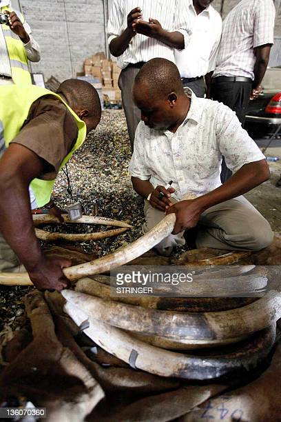 Officers from the Kenya's Revenue Authority and Kenya Wildlife Services examine elephant tusks seized at the main port of Mombasa on December 22 2011...