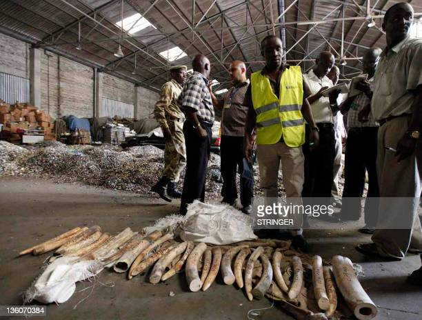 Officers from the Kenya's Revenue Authority and Kenya Wildlife Services stand over elephant tusks seized at the main port of Mombasa on December 22...