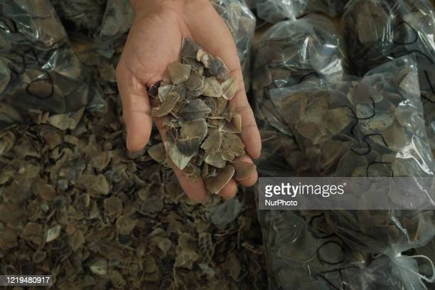 Officers show pangolin scales seized from poachers at the the Natural Resources Conservation Center Riau office in Pekanbaru, Riau Province ,...