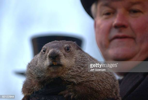 Official Groundhog Handler Bill Deeley holds Punxsutawney Phil as the weather prediction proclamation is read after the groundhog was used to make...