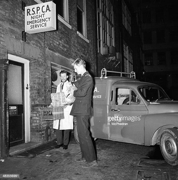 RSPCA official Nigel Bligh holding a rescued kitten at an RSPCA night emergency service January 1964