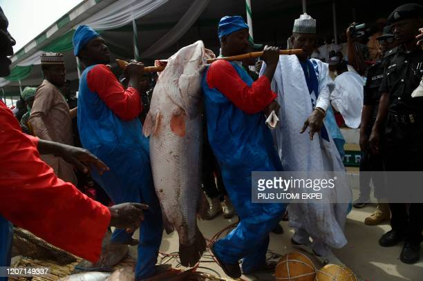 Officials carry a fish to weigh a on a scale at the Argungu fishing and cultural festival at Argungu Town Kebbi State in northwest Nigeria on March...