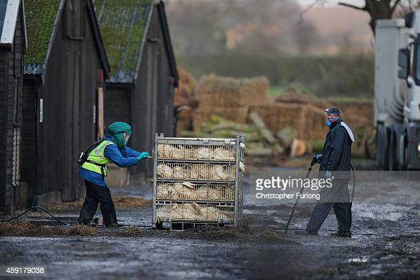 Officials from the Department for Environment Food Rural Affairs dispose of culled ducks at a farm near Nafferton East Yorkshire where a strain of...