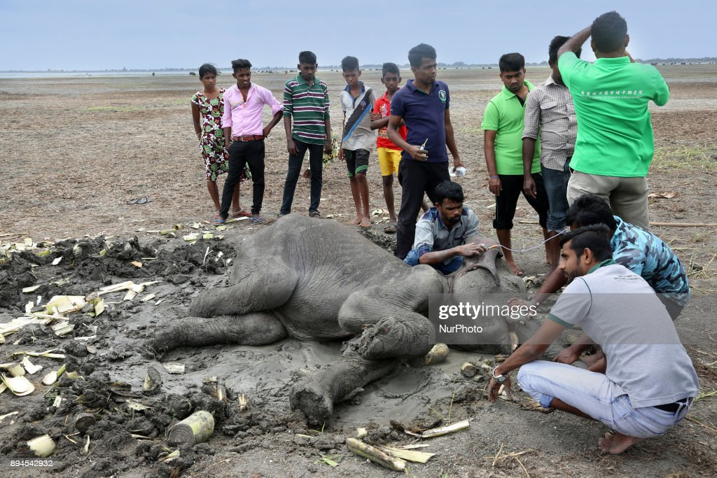 Officials from the Department of Wildlife Conservation work to try and save an elephant shot by ivory poachers near a remote jungle area in Mannar, Sri Lanka.