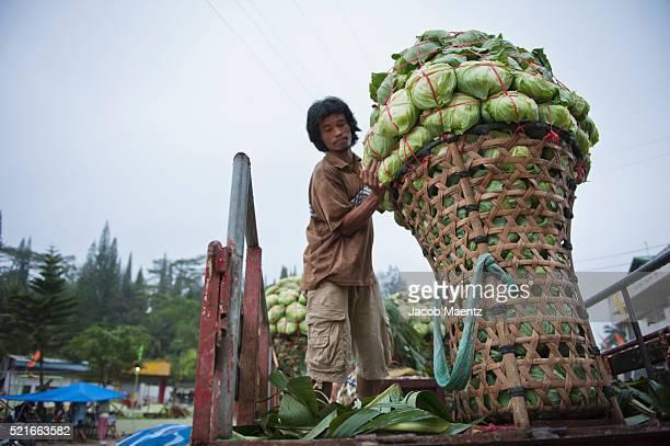 offloading vegetables at market - jacob muehe stock-fotos und bilder