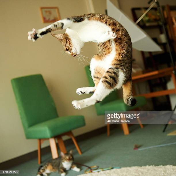 offshots - domestic animals stock pictures, royalty-free photos & images